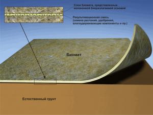 struktera-biomata